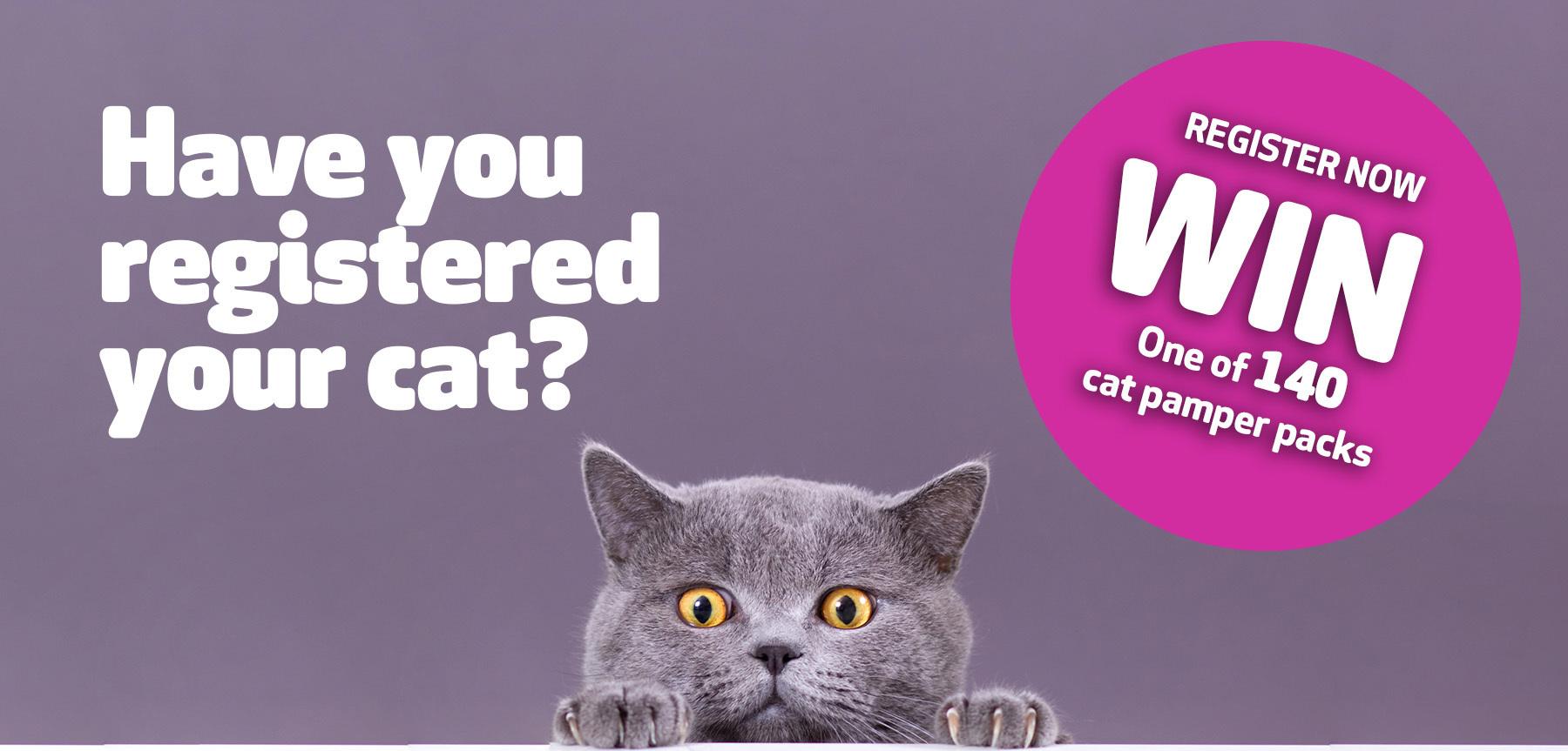 Cat Rego Prize Win